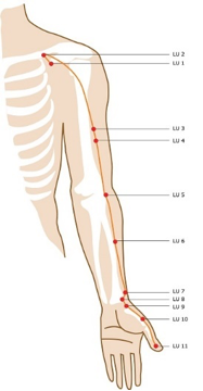 Lung Channel Arm